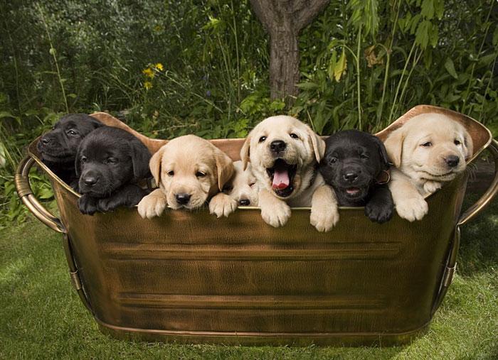 Fonds ecran chiens page 3 for Fond ecran chiot