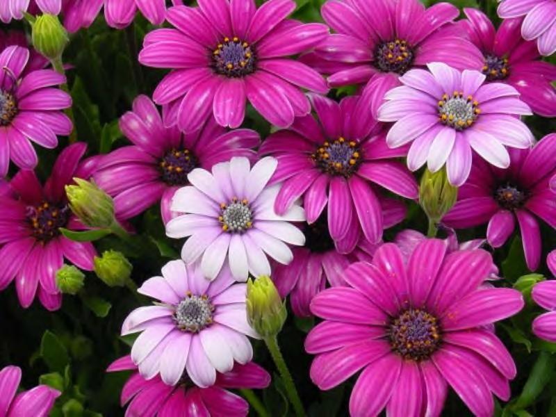 fonds ecran fleurs