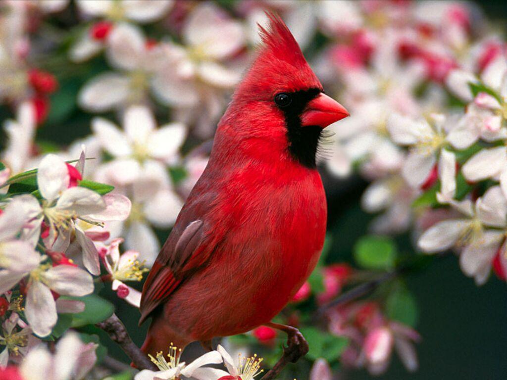 Fonds écran oiseaux